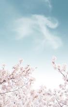 Beautiful Spring Flowers Background, Season Theme, Hello Spring