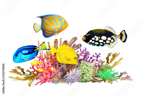 Reef with colorful corals and tropical fish- clown triggerfish, blue-ringed angelfish, blue and yellow tang and on a white background, hand drawn watercolor Canvas Print