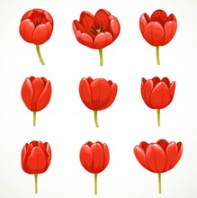 Red Tulip Flowers Set Isolated On White Background