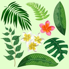leaves and flowers of tropical plants. set of color illustrations