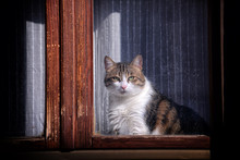 Nice Domestic Cat Looks At The Camera Through The Window