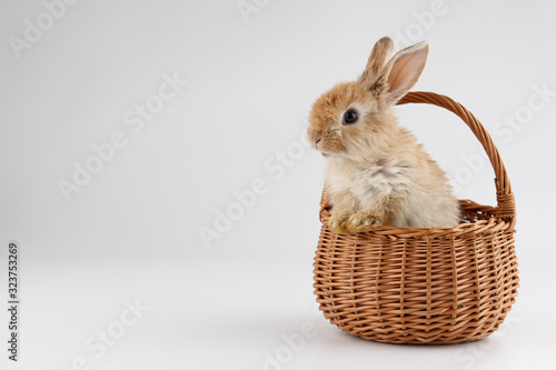 Fotografija Easter bunny rabbit in basket on gray background
