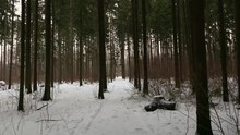 I Walk Slowly Along The Forest Snow Path In The Winter Forest. Russian Winter. The Gimbal.