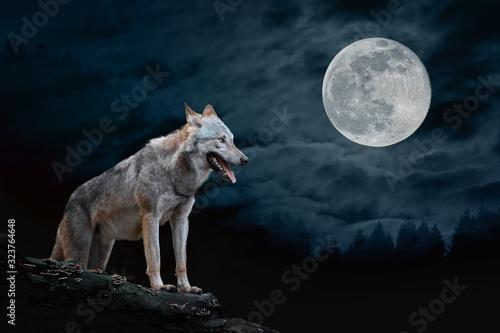 Fototapeta Wolf in the background of the moon obraz na płótnie