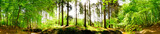 Fototapeta Las - Forest panorama in spring with brook and bright sun shining through the trees