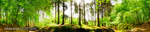 Forest panorama in spring with brook and bright sun shining through the trees
