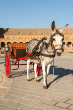A Small And Funny Gray Donkey, Resting After Pulling One Of The Traditional Cars That Can Be Found In Seville And In The Plaza De España In Seville.