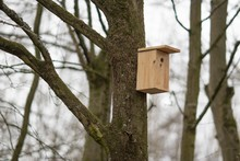 Wooden Bird Nest Box On A Tree Surrounded By Trees With A Blurry Background
