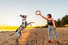 Active Woman Playing With Great Dane Dog And Ring On Sandy Beach