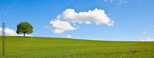 Fototapeta Arbre en campagne, paysage rural au printemps. obraz