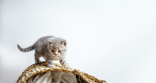 Lovely Kittens On Wicker Baske...
