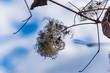 canvas print picture - weidenblüte im winter nahaufnahme