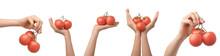 Hand Holding Tomato. Several V...