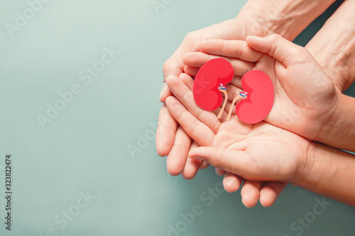 Obraz Adult and child holding kidney shaped paper on textured blue background, world kidney day, National Organ Donor Day, charity donation concept - fototapety do salonu