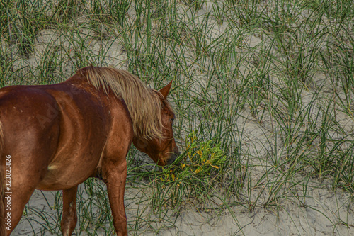 wild horse sand dunes