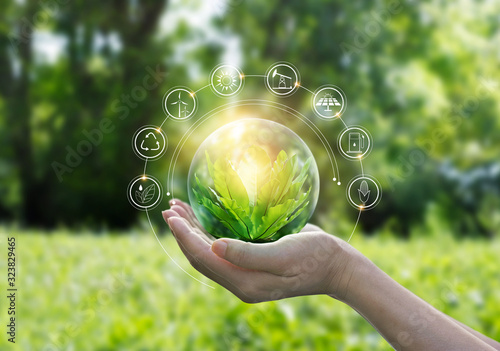 Fotomural Hands protecting globe of green tree on tropical nature summer background, Ecolo