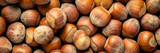 hazelnuts on dark background
