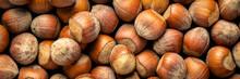 Hazelnuts On Dark Background