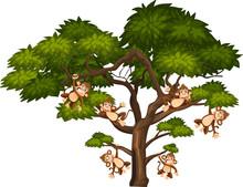 Big Tree And Monkeys On White ...