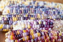 Heirloom Glass Gem Corn From G...