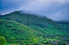 Foggy Mountain Covered In Gree...