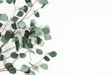 Eucalyptus Leaves On White Bac...