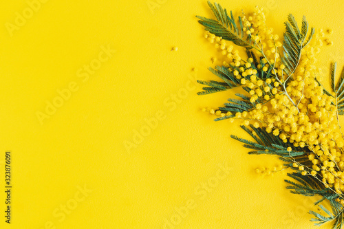 Flowers composition. Mimosa flowers on yellow background. Spring concept. Fla...