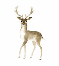Beautiful Deer. Hand Painted W...