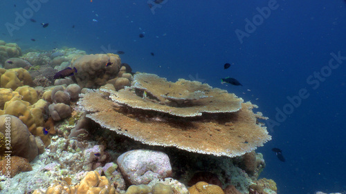 Photo Reef with Acropora table coral (Acropora hyacinthus), Indian Ocean, Seychelles