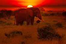 Elefanten Und Sonnenuntergang Im Nationalpark Tsavo Ost Und Tsavo West In Kenia