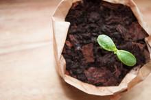 Seedlings In A Paper Pot, Mont...