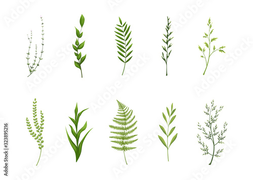Fototapety, obrazy: Collection of green leaves.