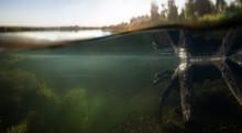 Underwater Background. Design ...