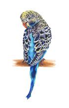 The Blue Wavy Parrot