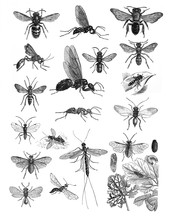 Insects Collection Bugs Beetles And Fleas Many Species / Antique Engraved Illustration From Brockhaus Konversations-Lexikon 1908