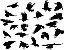 Group Of Twenty One Crow Black...