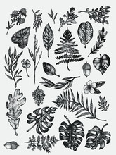 Hand Drawn Botanical Forest Co...