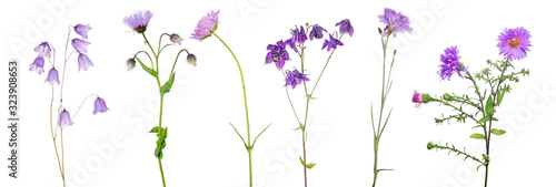 six isolated lilac flowers with stems Wallpaper Mural