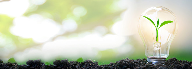 Sapling glowing in light bulb in soil with natural bokeh background, idea or energy and safe environment concept