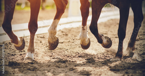 Fotografie, Obraz The legs of two strong racehorses galloping across the sandy arena, their unshod hooves kicking up dust, lit in the sunlight