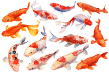 Set Of Watercolor Koi Fish, Isolated With Background