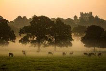 Wollaton Hall And Deer Park Manor House Nottingham, United Kingdom UK. Misty Golden Morning Sunrise. Manor House In Distance, Red Deer Herd Silhouettes Grazing