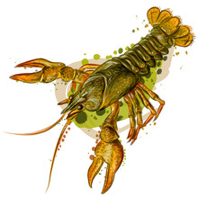 Crayfish. Color, Realistic Ima...