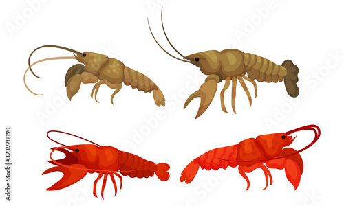 Valokuvatapetti Lobsters with Thick Shell and Strong Chelate Limbs Vector Set