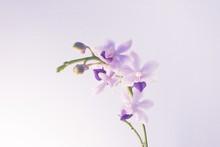 Closeup Shot Of A Light Purple Flower