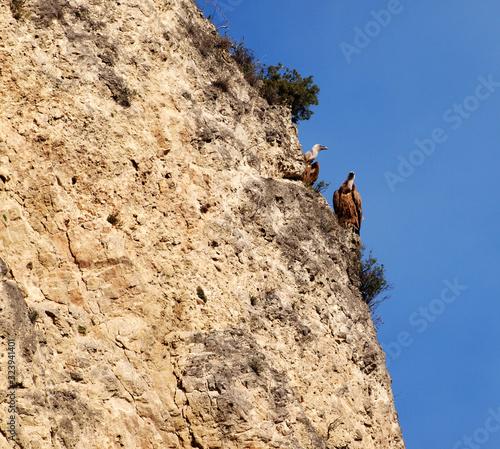 rock climber on top of mountain Wallpaper Mural