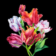 Panel Szklany Kwiaty Watercolor Bouquet tulips. tulips. Colorful flowers on black background. Botanical art.