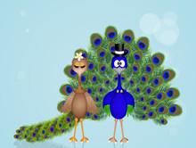 Peacocks Couple
