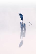 Foggy Landscape Of Great Blue ...