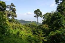 Tropischer Regenwald In Penang - Tropenwald